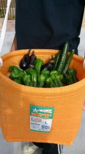 家庭菜園収穫